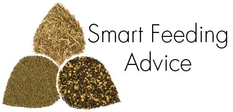 SMART-HORSE-NUTRITION-Advice
