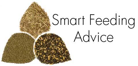 SMART-HORSE-NUTRITION-Advice