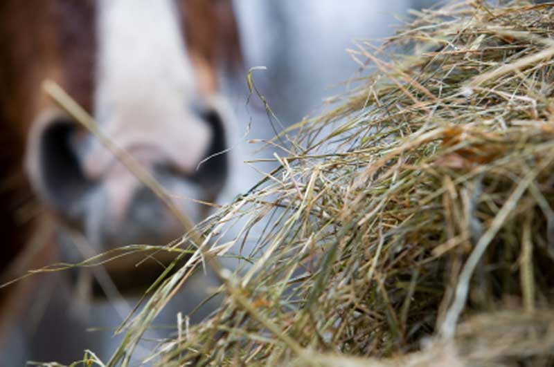 Hay v Haylage - which is right for your