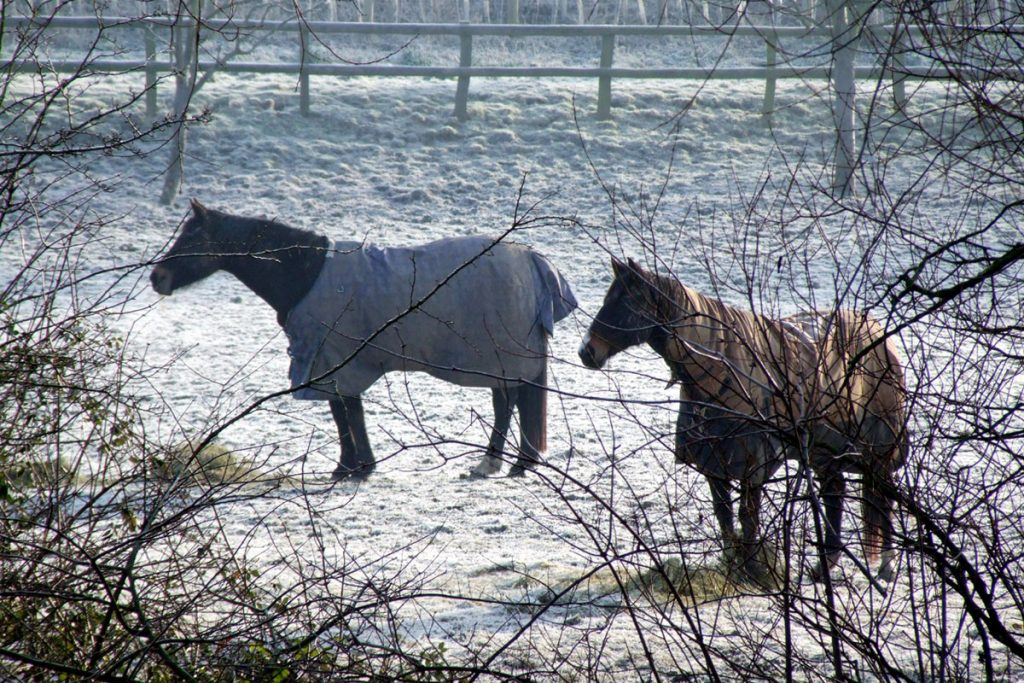 Winter-horses