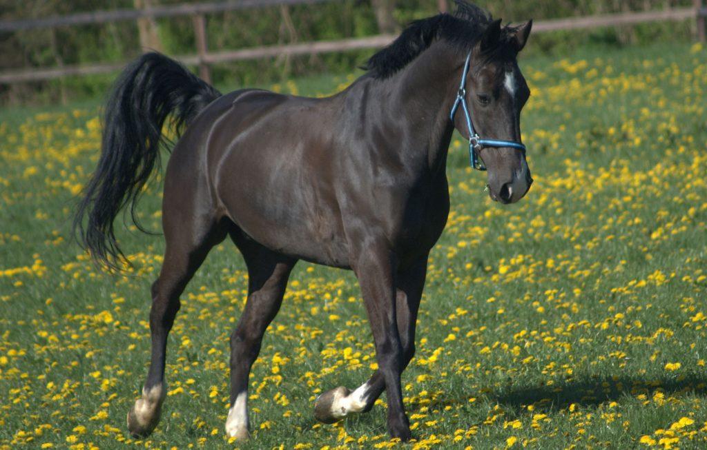 spring-horses