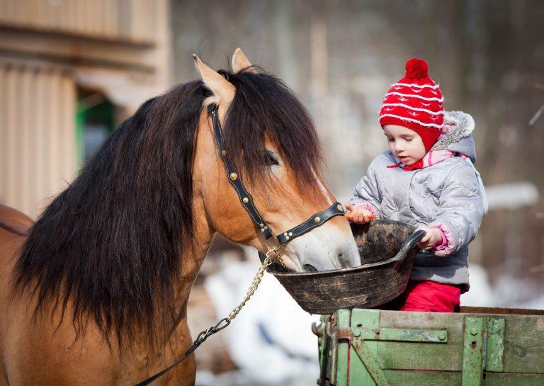 Child-feeding-horse